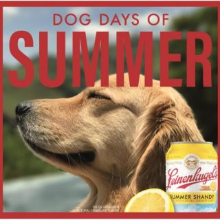 Happiness is enjoying an ice cold Summer Shandy on a hot summer day with your best friend at your side 🐶🍻! #bevdistcle #cleveland #summershandy #summer